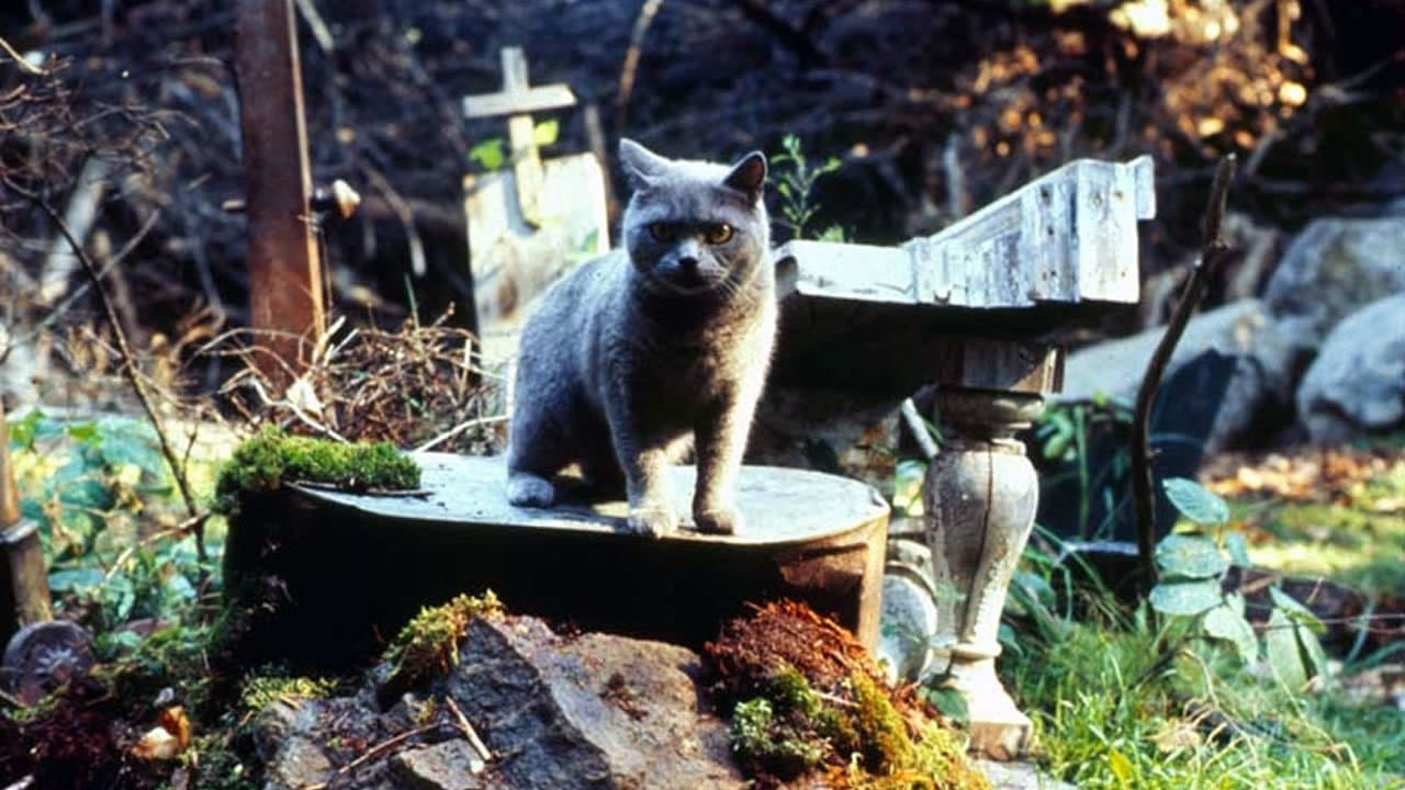 Pet Sematary 1989 Frame Rated